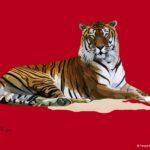 Tigre couché - François Bachelot